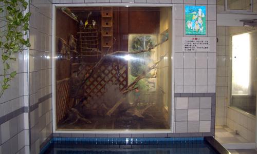 インコ風呂_9