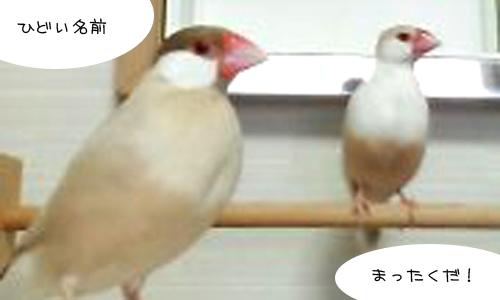 我が家の鳥昔話_2