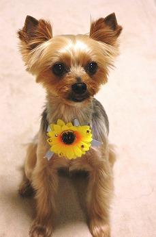 ひっまわりは夏のお花だよー♪