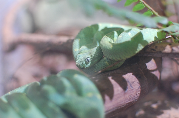 蛇ちゃん①