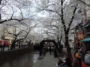 高瀬川blog01