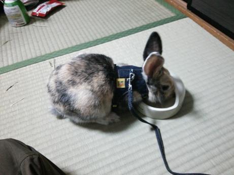 ぽっちゃん散歩練習