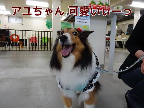 アユちゃん グッジョブ!.