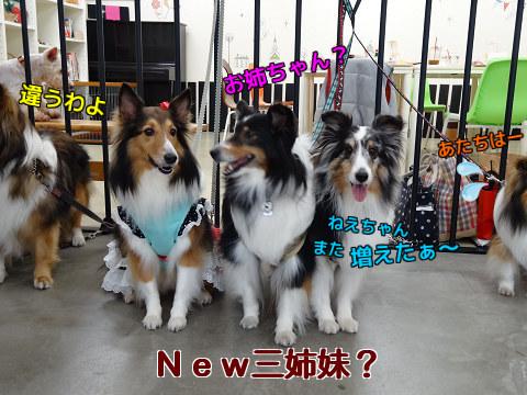 New三姉妹?