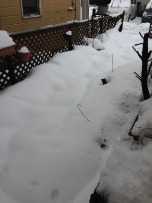 大雪ホワイトバレンタイン1