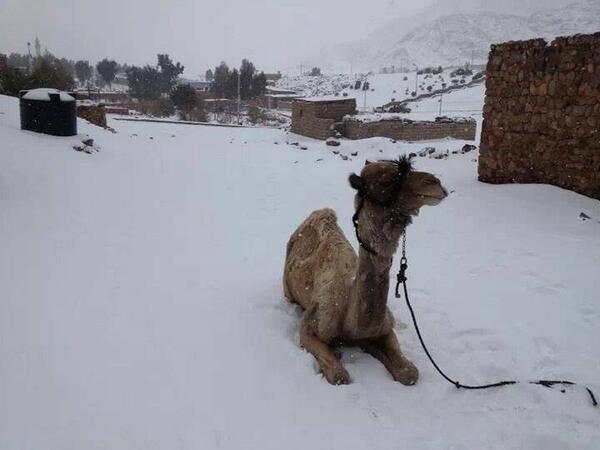15bc1658エジプトで歴史上初めての積雪2013年12月13日
