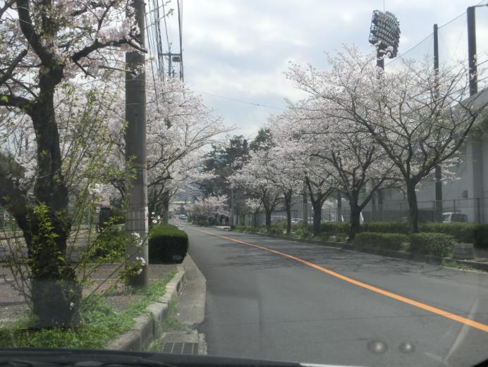 二河球場前桜並木
