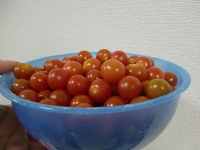 プチトマト200