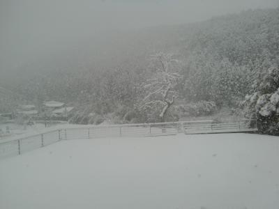 2月14日雪1