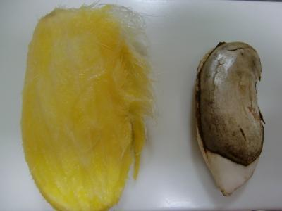 マンゴー種子2