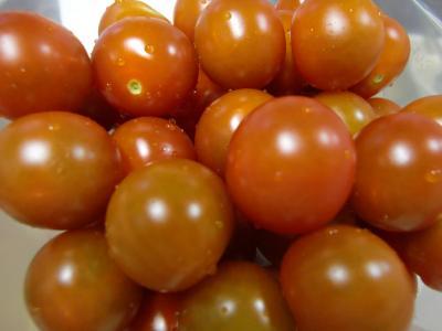 プチトマト7・7