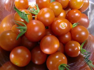 プチトマト7・8