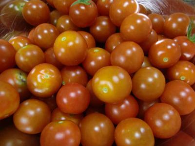 7・17プチトマト2