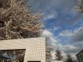 16号沿いの桜