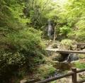 払沢の滝 (1)