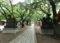 鷲宮神社 (3)