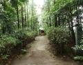 鷲宮神社 (11)
