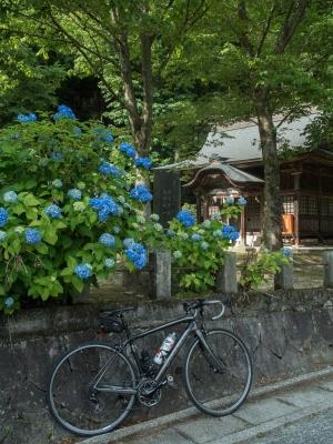 高木神社のあじさい