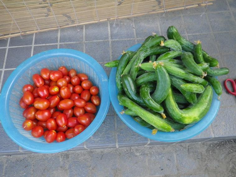 収穫2_14_07_15