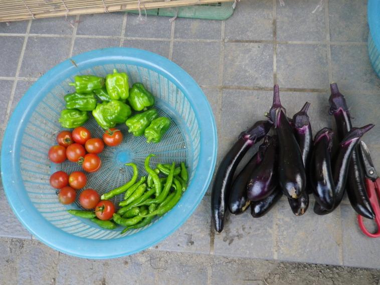 収穫2_14_07_16