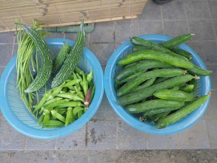 収穫1_14_07_16