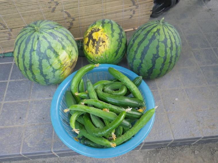 収穫2_14_07_17
