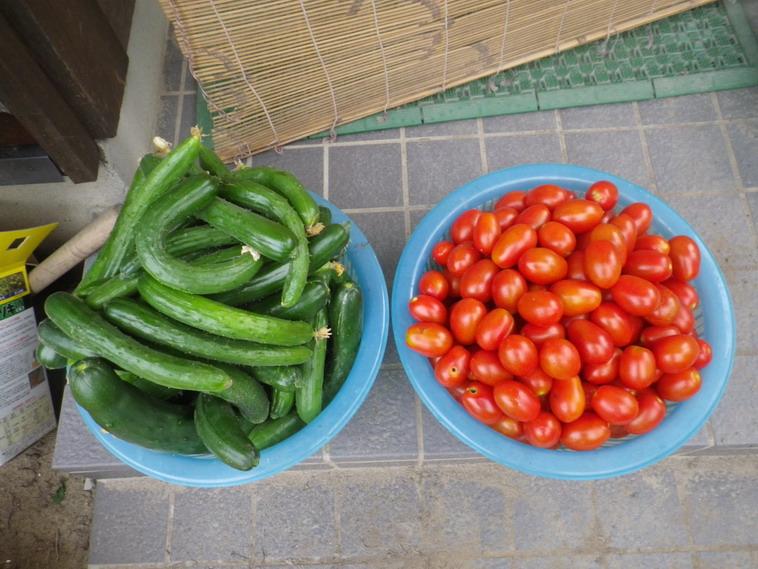 収穫1_14_07_18