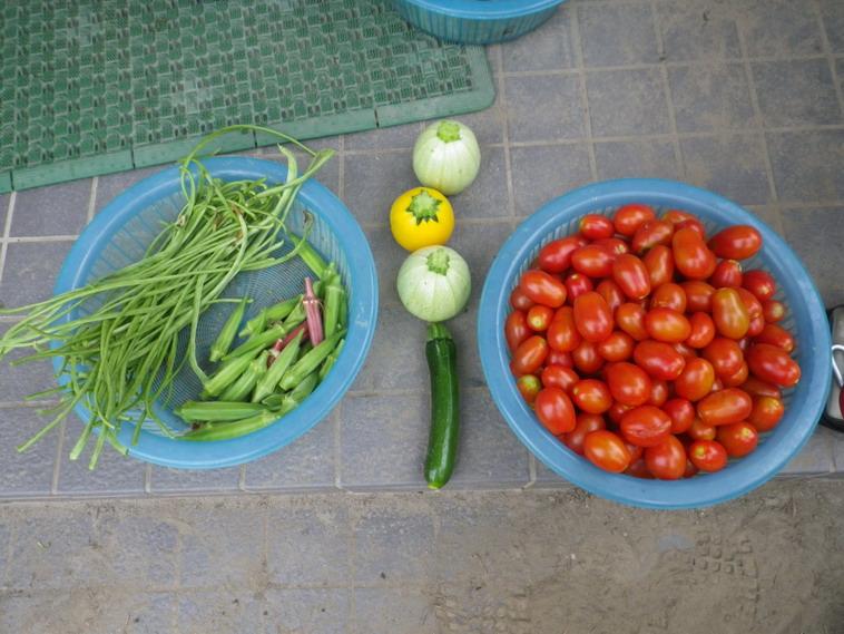 収穫3_14_07_19