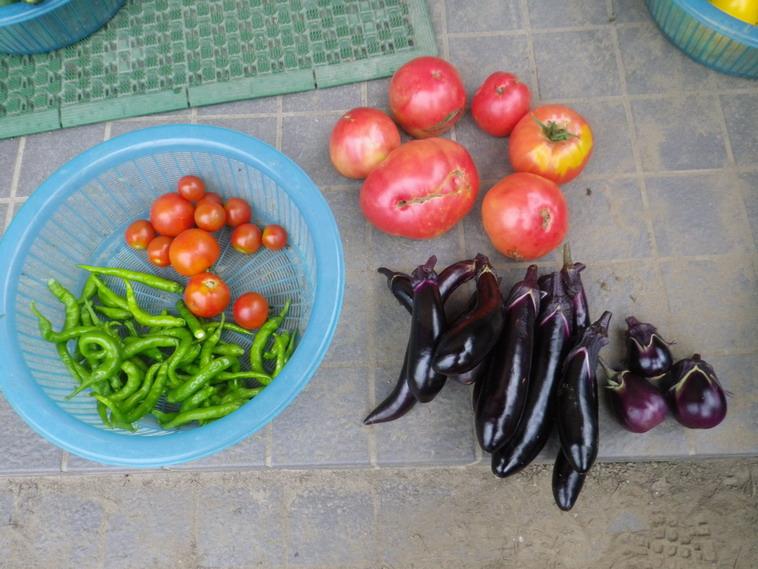 収穫1_14_07_19