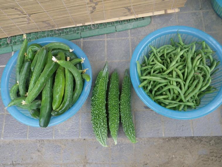 収穫2_174_07_19
