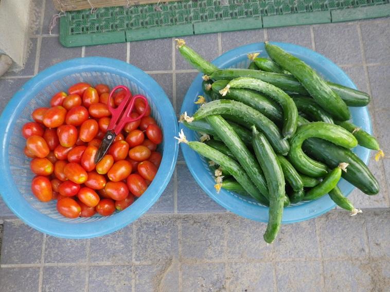 収穫1_14_07_20