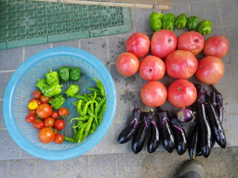 収穫2_14_07_20