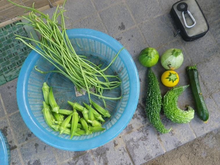 収穫14_07_20