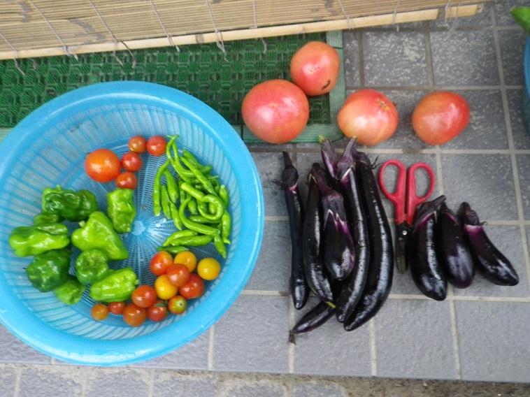 収穫ナストマト14_07_21