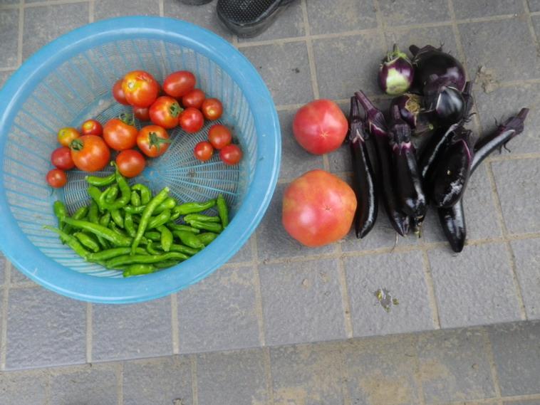 収穫2_14_07_22
