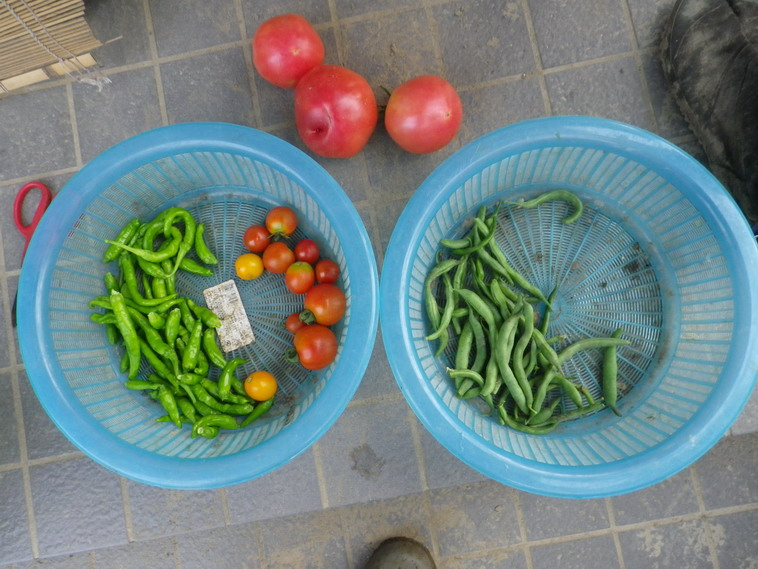 収穫2_14_07_23