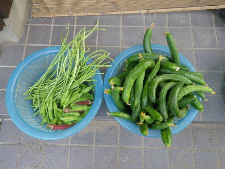 収穫1_14_07_23
