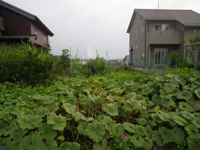 隣の畑3_14_07_22