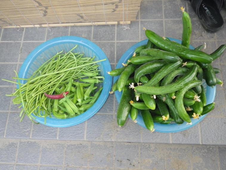 収穫1_14_07_24