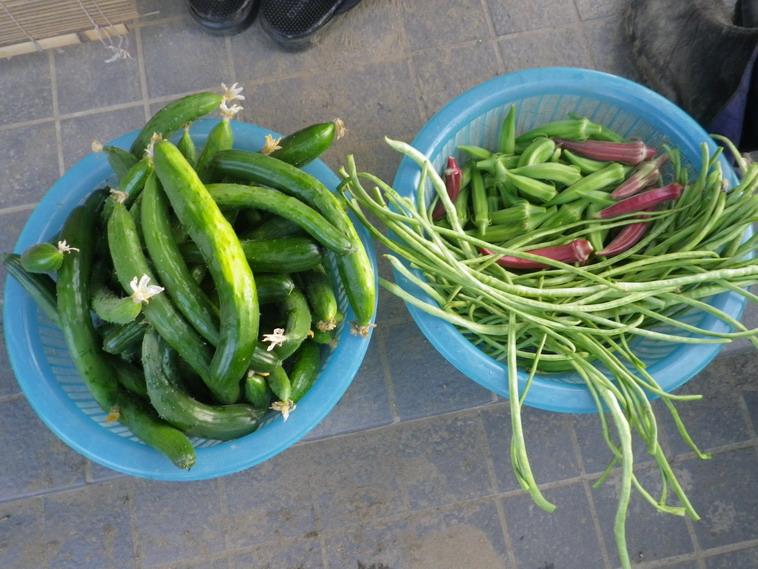 収穫2_14_07_25
