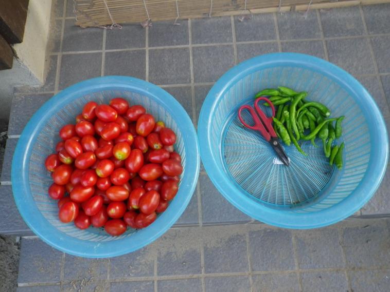 収穫1_14_07_25
