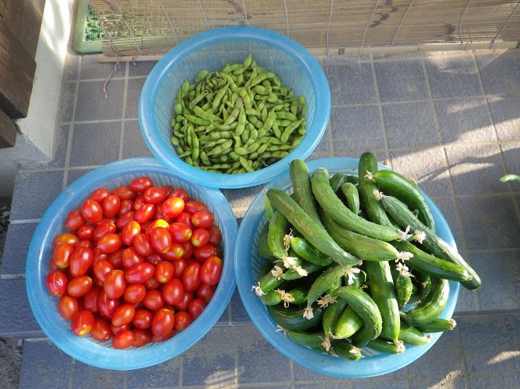 朝の収穫1_14_07_26