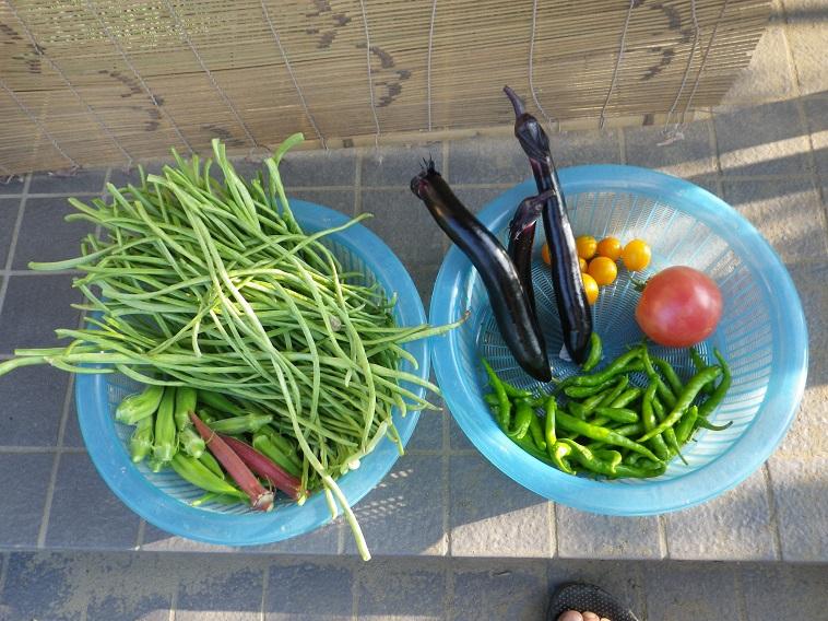 朝の収穫2_14_07_26
