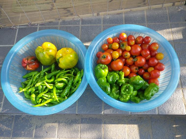 朝の収穫1_14_07_27
