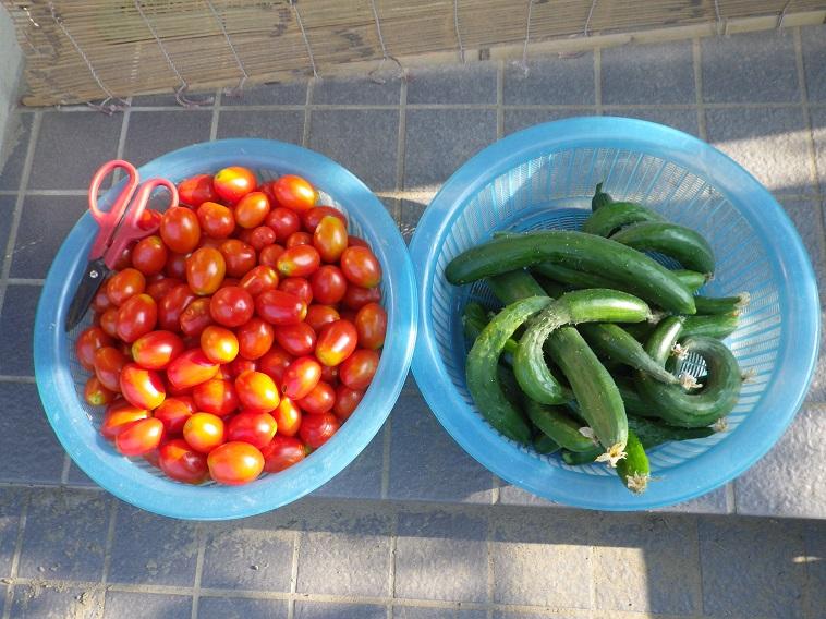 朝の収穫2_14_07_27