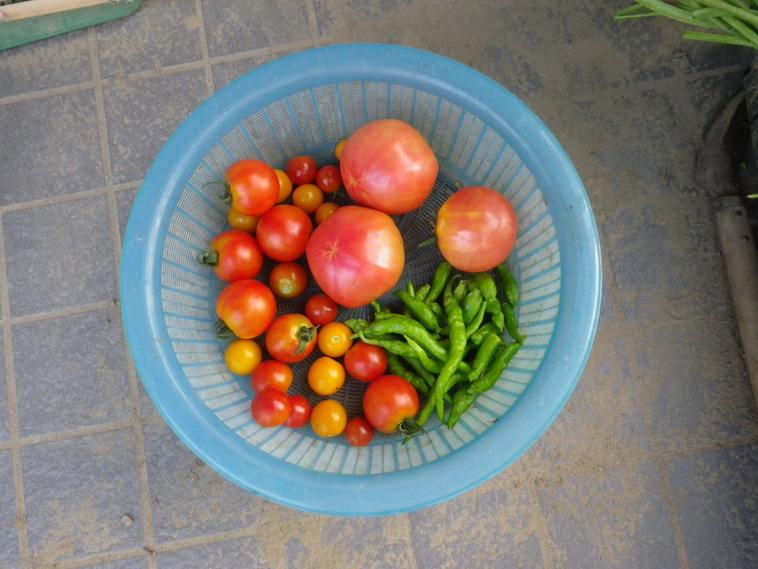 収穫2_14_07_29