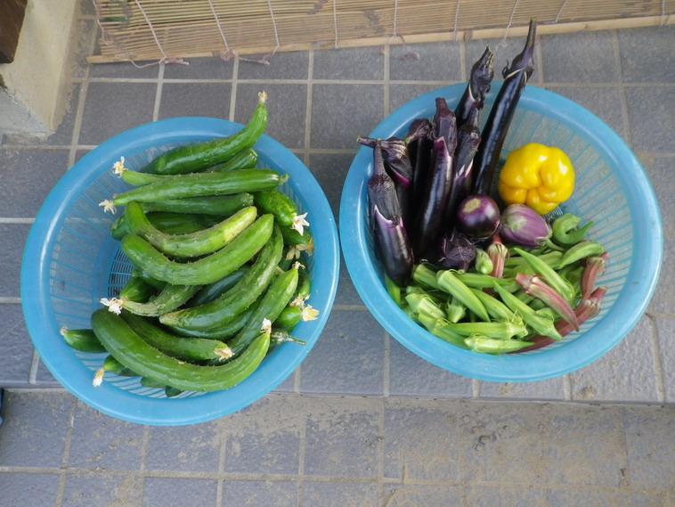 収穫1_14_07_29