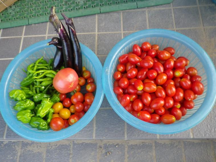 収穫2_14_07_30