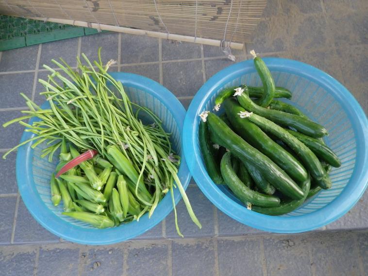 収穫1_14_07_30