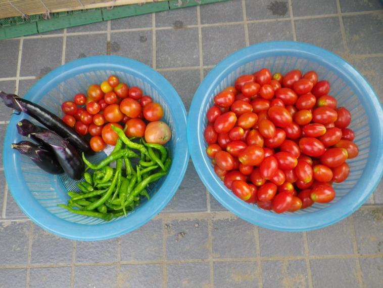 収穫2_14_07_31